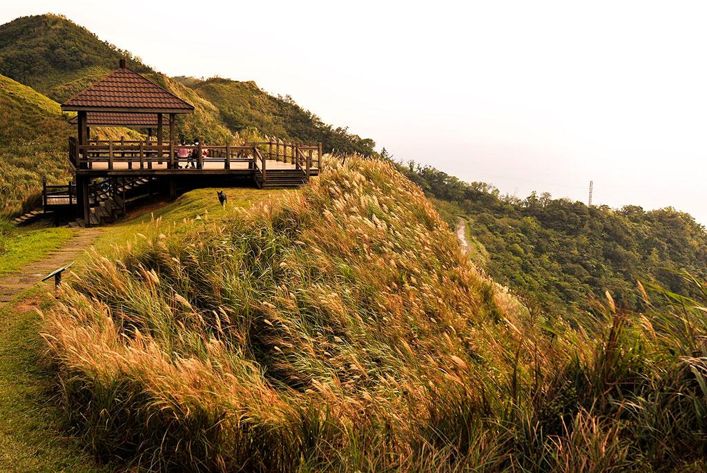 芒芒人海遇見你!秋季限定草嶺古道芒花季 踏遍滿山銀色的浪花
