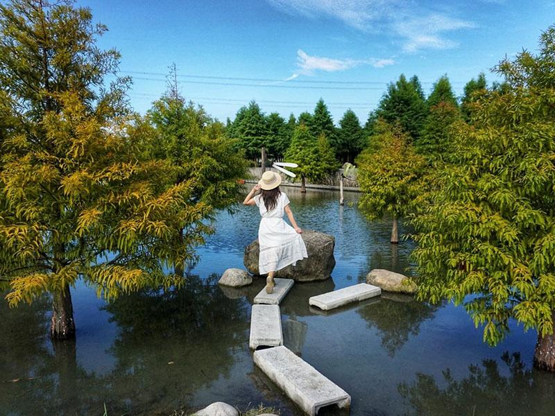 「水漾森林」落羽松秘境重新開放,泰安全新網美風造景超好拍