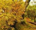 秋天旅遊必拍美景|首推芒花、楓葉、山毛櫸 輕鬆拍出網美照