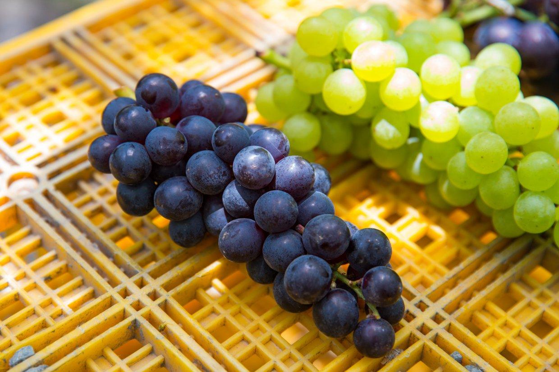 紫水晶葡萄與綠水晶葡萄
