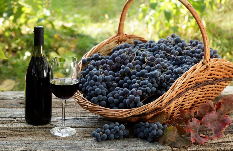 黑后葡萄與金香葡萄