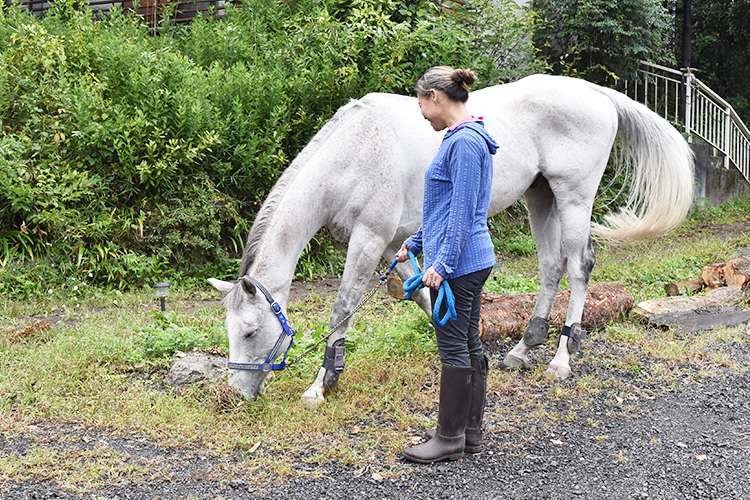オーナーと一緒にお散歩中の馬