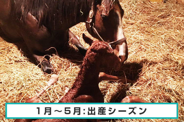 1月~5月:出産シーズン