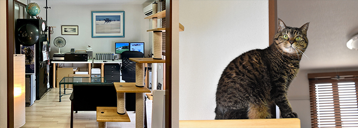 洗練されたリビング/キャットタワーには太田さんの愛猫ぐうちゃん