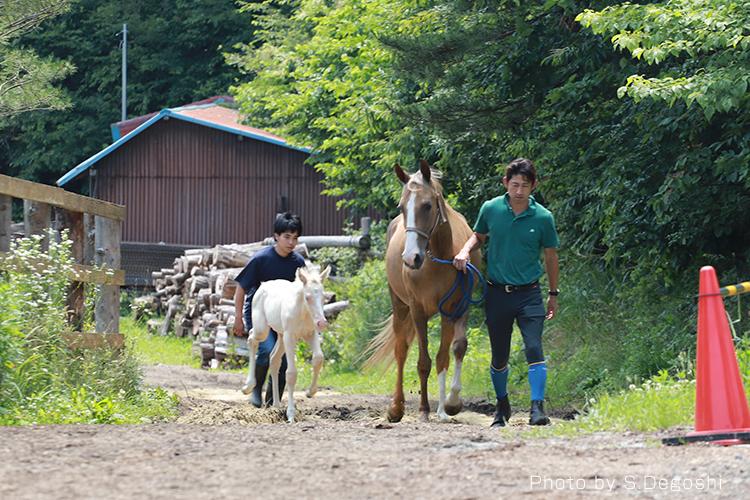 Pacalla編集部、黄金の馬『アハルテケ』に会いに行ってきた!