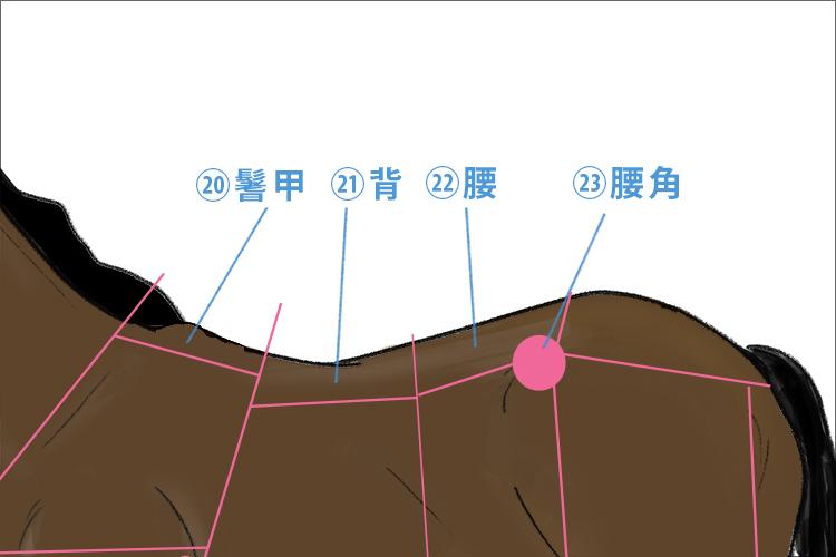 馬体各部の名称