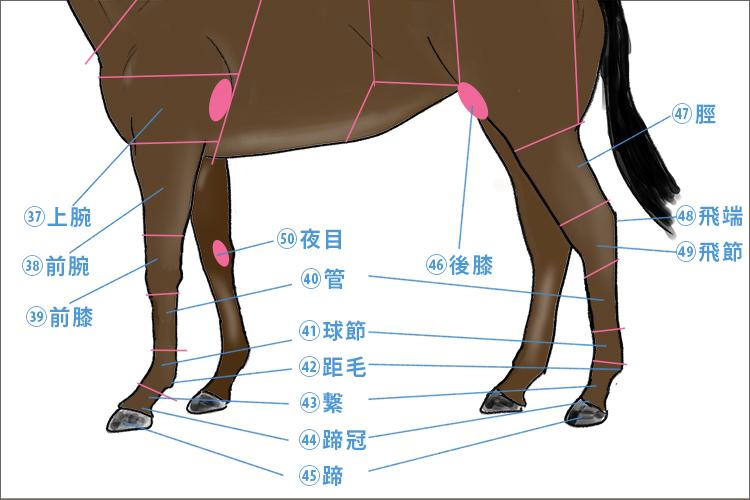 馬体の各部名称