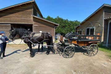 フリージアンの馬車を自分で運転できる⁉ 比企の丘キッズガルテンへ行ってみた