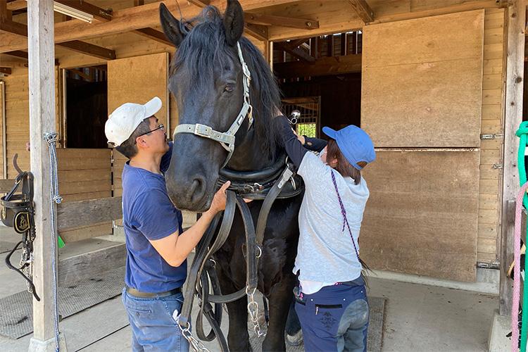 馬車用の馬装
