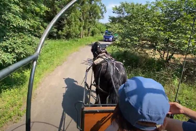 馬車の御者体験