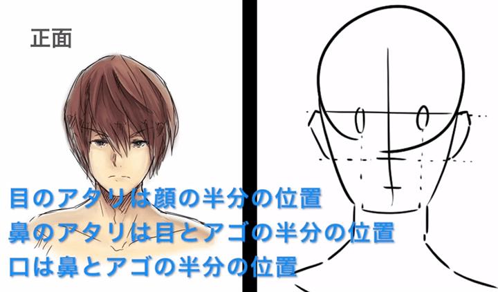 目と鼻の位置は顔全体の半分