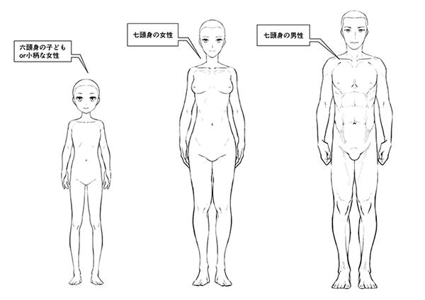 子ども・女性・男性の体型の比較