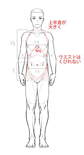 男性の体型