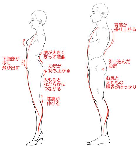 横から見た男女の体型比較