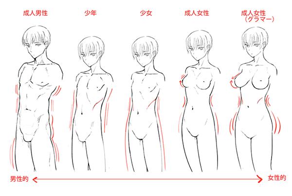男性的・中性的・女性的な体型のバリエーション