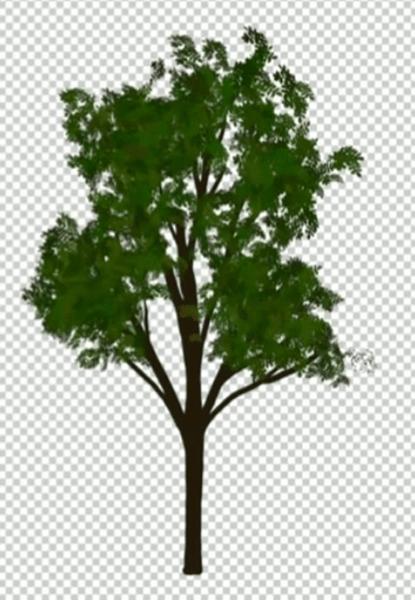 濃い葉を持つ木