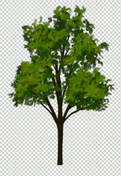 少し明るい葉を持つ木