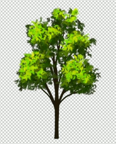 明るい葉を持つ樹