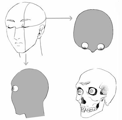 立体的な目の構造