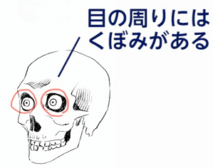 眼球が収まるくぼみ