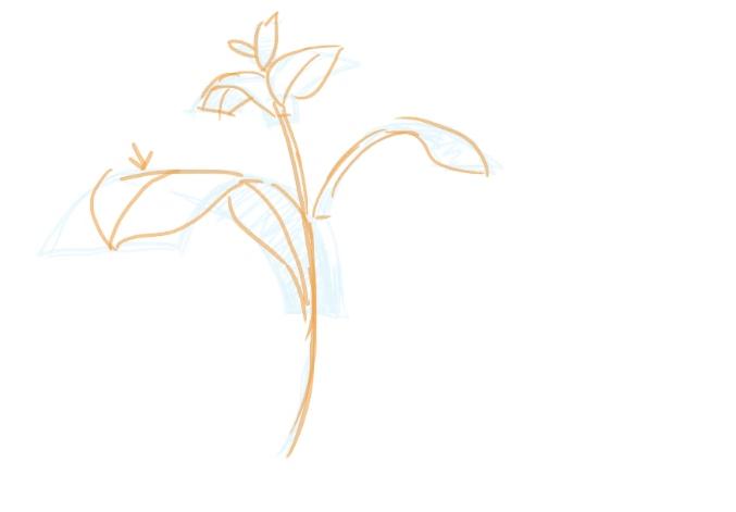 葉のバランスを描く