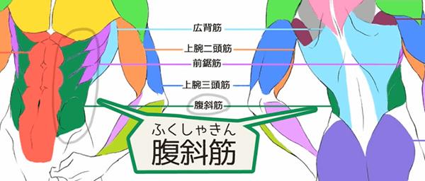 お腹の横側にある腹斜筋
