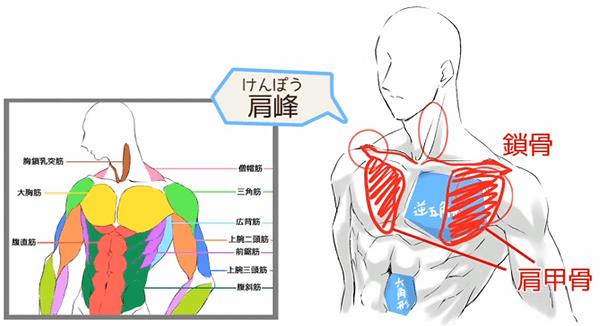 肩峰の位置