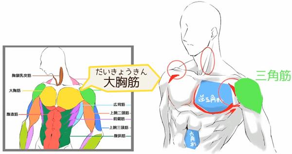 大胸筋の描き方