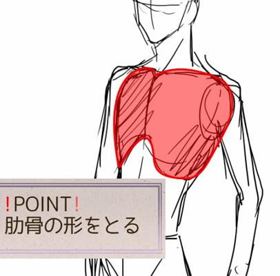 肋骨の形をとる