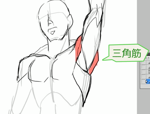 腕をあげた時の三角筋の形