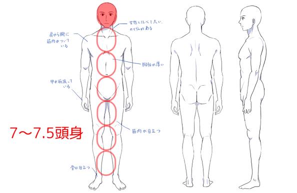 男性は約7頭身><br>  <p>頭の大きさは肩幅の約三分の一程度です。</p>  <img src=