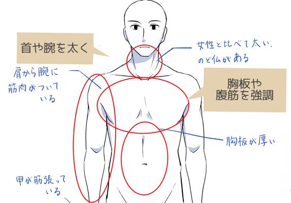胸板や腹筋を強調