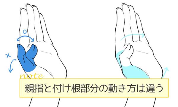 親指と付け根部分の動きは違う