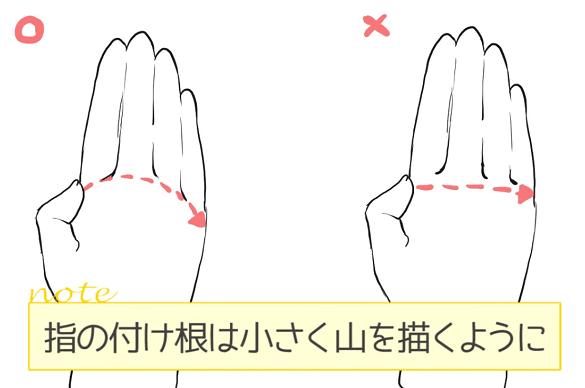 指の付け根は小さく山を描くように