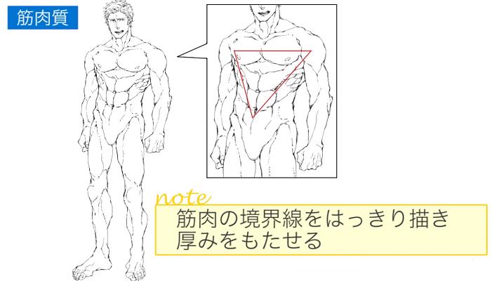 筋肉の境界線ははっきり