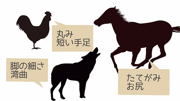 動物のシルエットの特徴