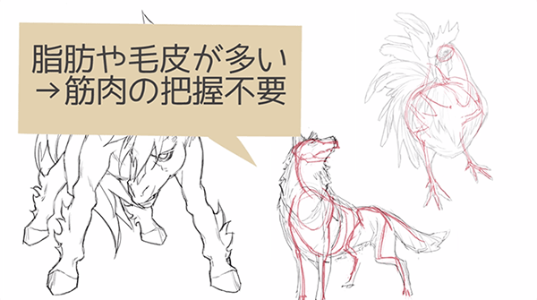 動物の筋肉の付き方の特徴