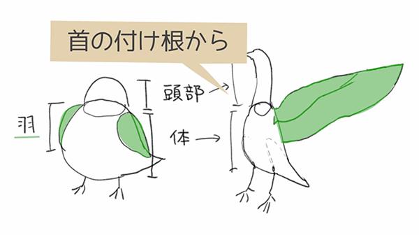 羽は首の付け根から描く