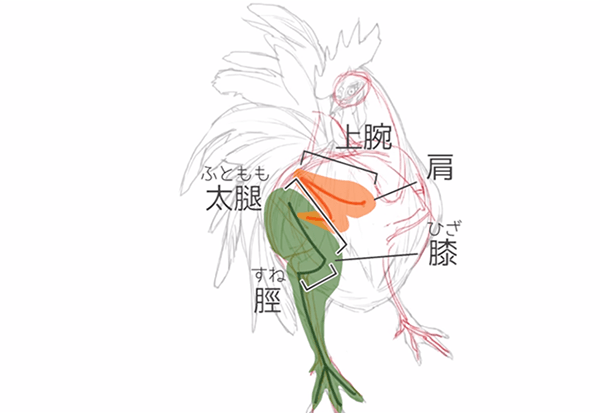 鳥と人間の共通点を意識する