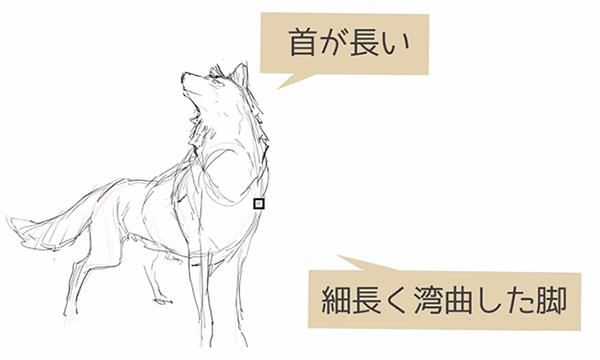 狼のリアルな表現