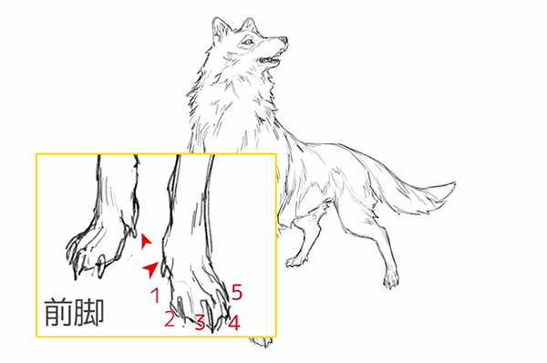 足の指の数が前後で異なる