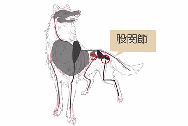 狼の股関節