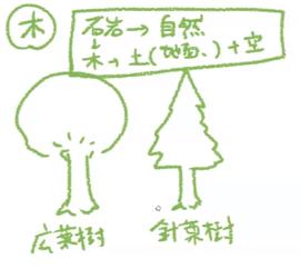 針葉樹と広葉樹の木