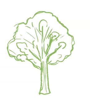 広葉樹は幹と葉から成る