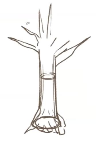幹から生える枝