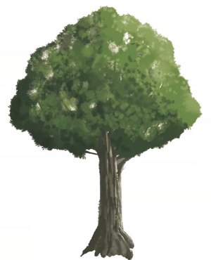 木の完成イラスト