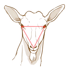 ヤギの顔は逆三角形