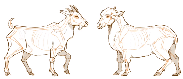 ヤギと羊はヒヅメが4つ