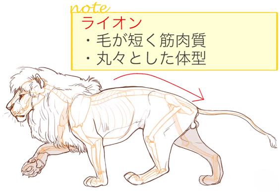 ライオンの体の特徴