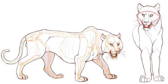 虎の顔の特徴